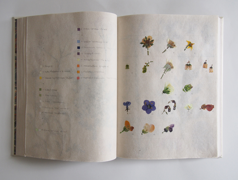 Herbarium 30.jpg