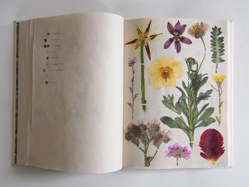 Herbarium 31.jpg