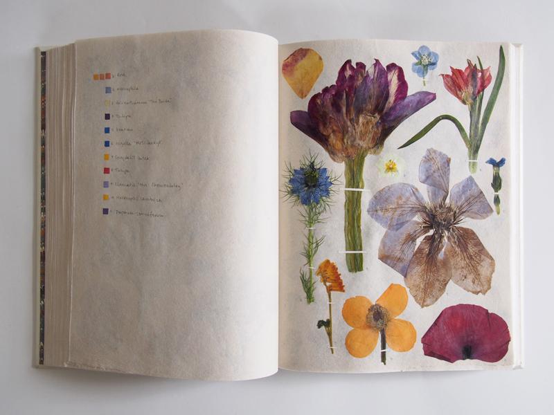 Herbarium 32.jpg