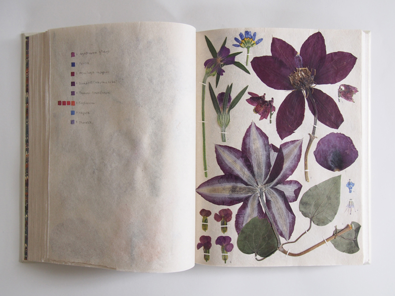 Herbarium 33.jpg