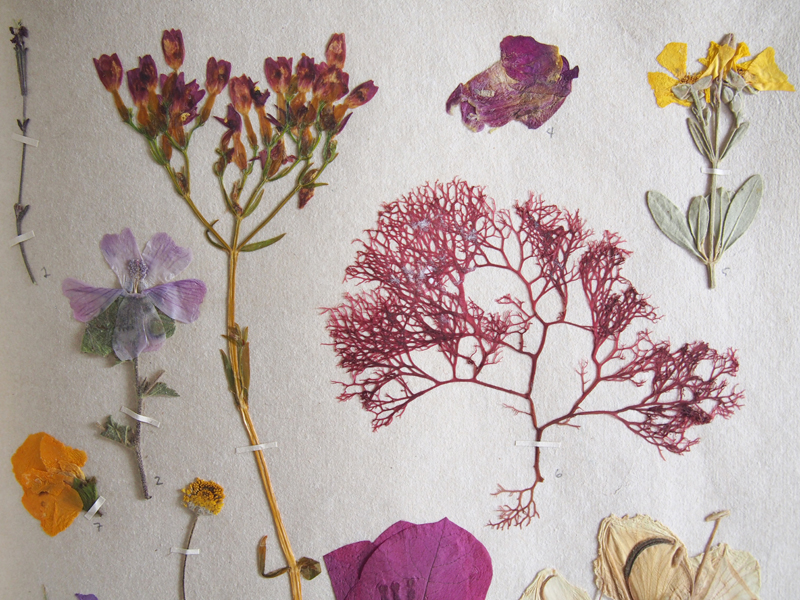 Herbarium 36.jpg