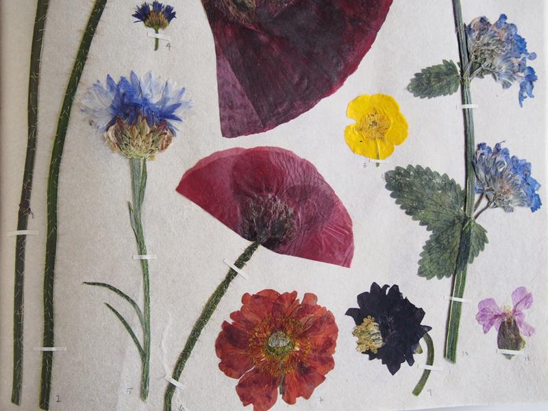 Herbarium 37.jpg