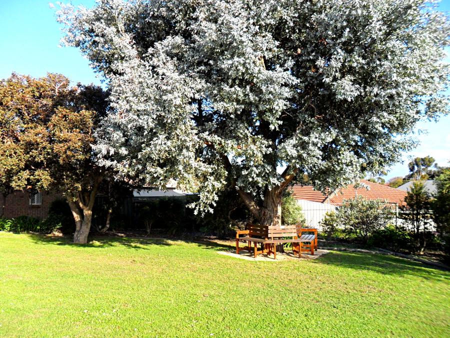 tree chair2.JPG