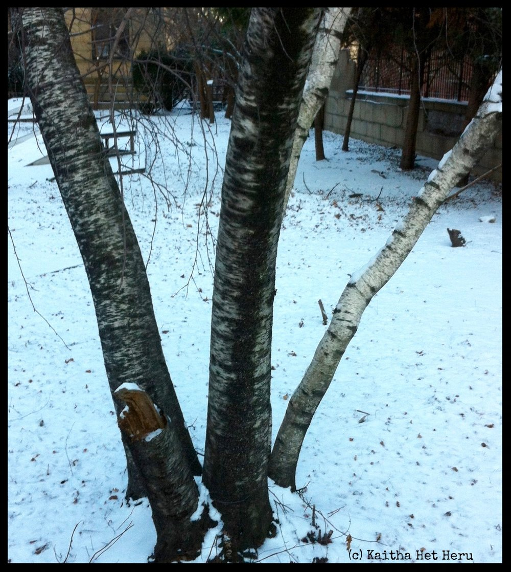 Artistic Inspiration: Inspired by The Beauty of Nature...Birch
