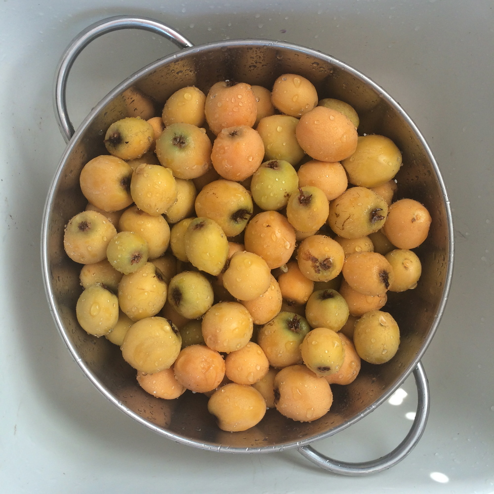 So the first thing I decided to make was Loquat Jam, Obviously. Here's how I did it... 6 cups of loquats peeled and seeded 3 cups of granulated sugar 3 cups of water 2 lemons (just the juice)  and about 3 hours of patience and not much else to do.