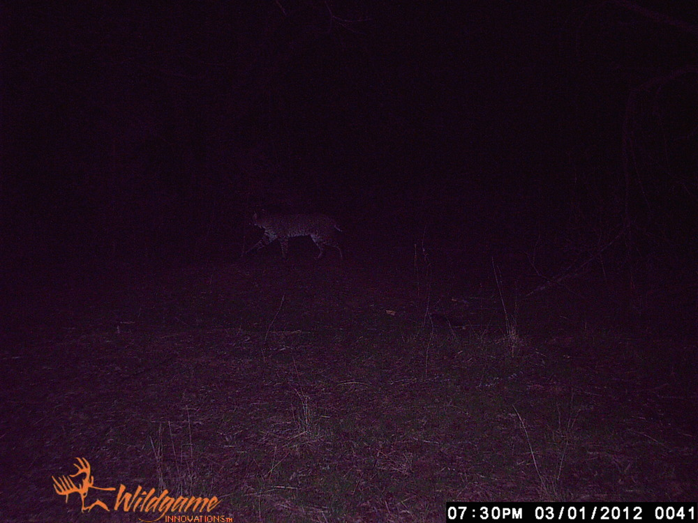 memory card videos and trail cam 2012 063.JPG