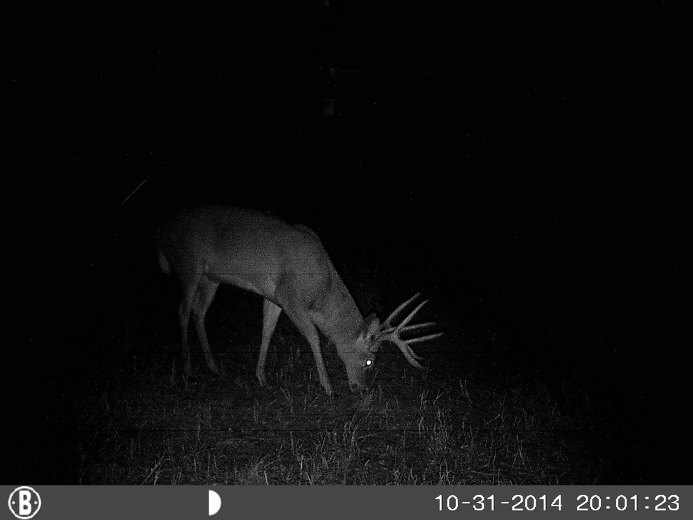 11-2-14 big elm trail camera 351.JPG