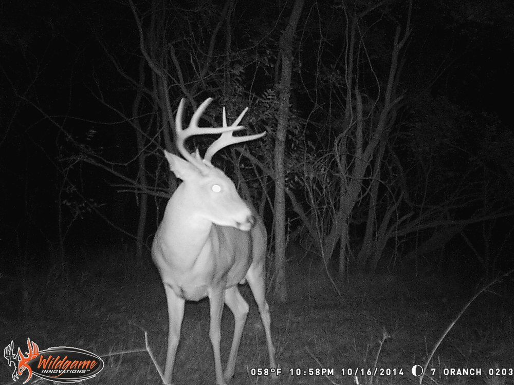 11-2-14 deep woods stand trail camera 041.JPG