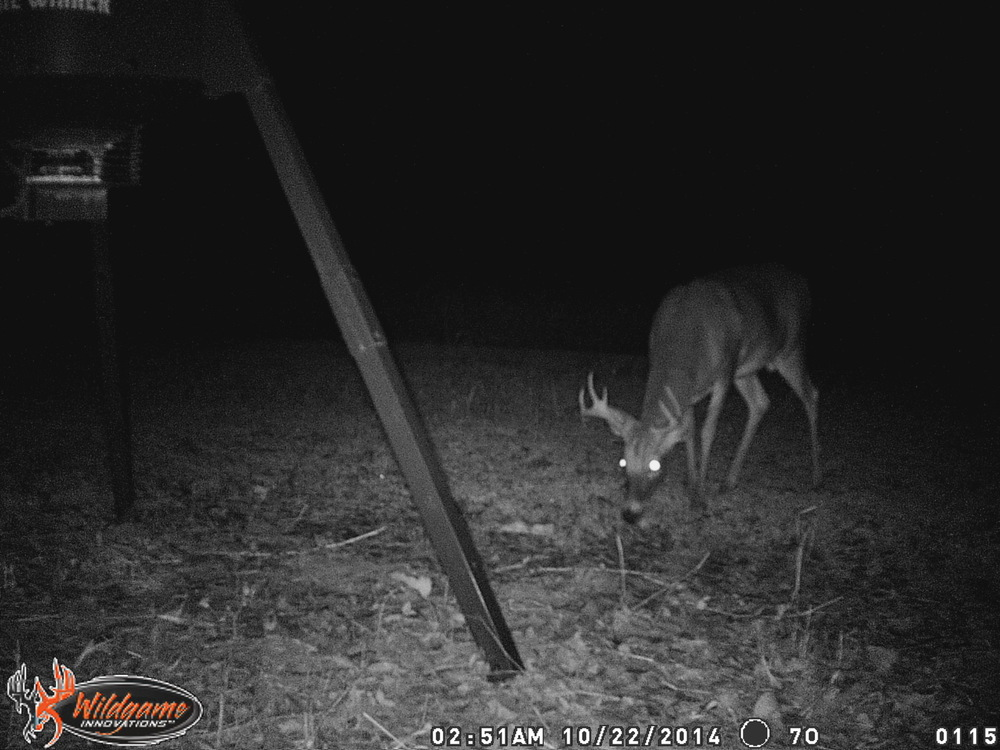11-9-14 west river trail cam 114.JPG