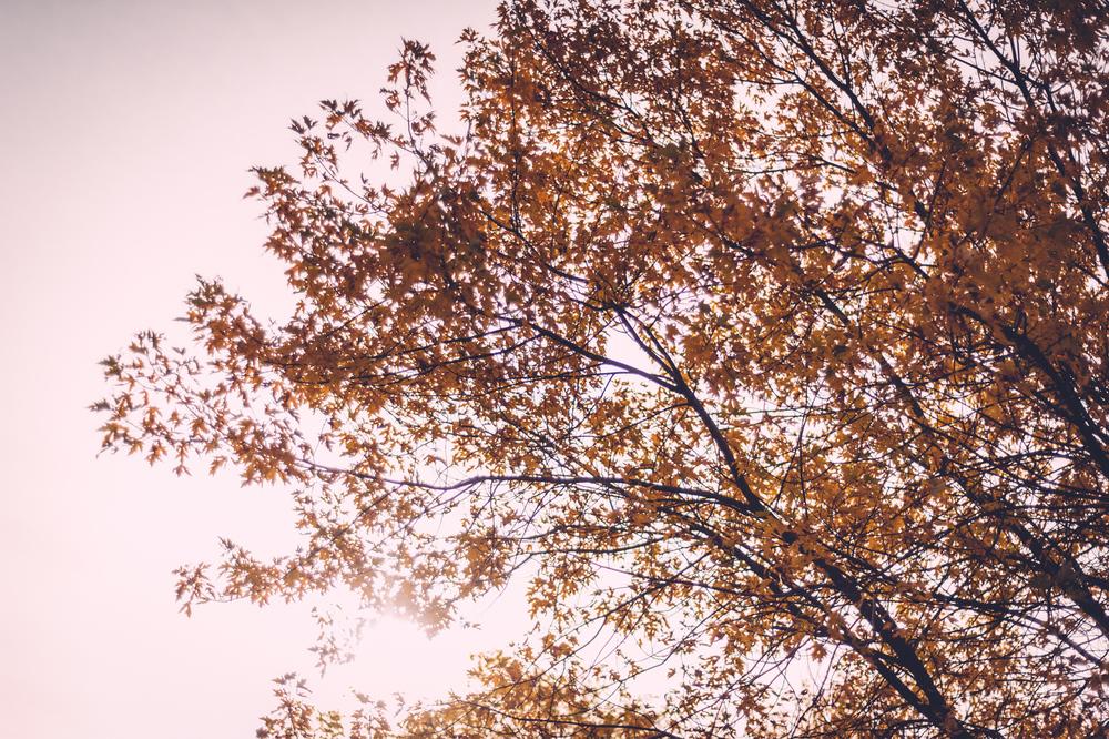 chippewa_fall9.jpg