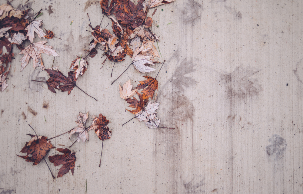 boulevard_lake_blog6.jpg