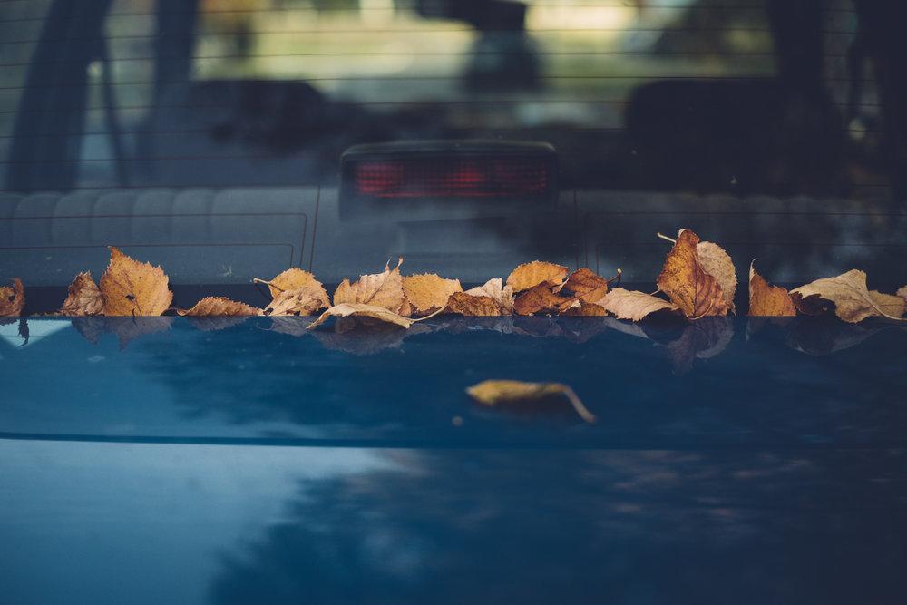 autumnwalk_1017175.jpg