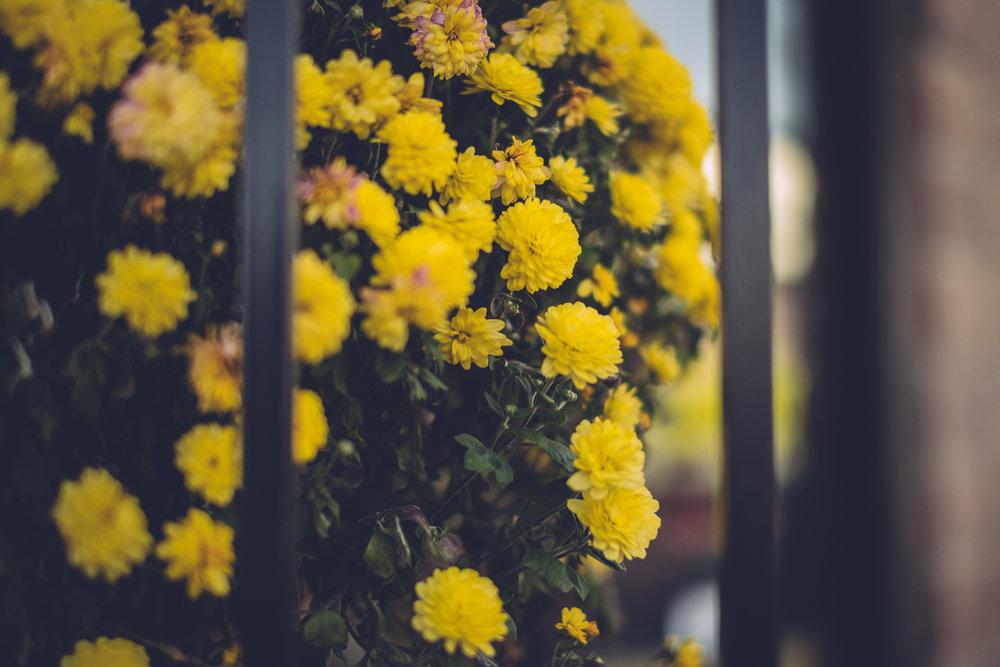 autumnwalk_10171712.jpg