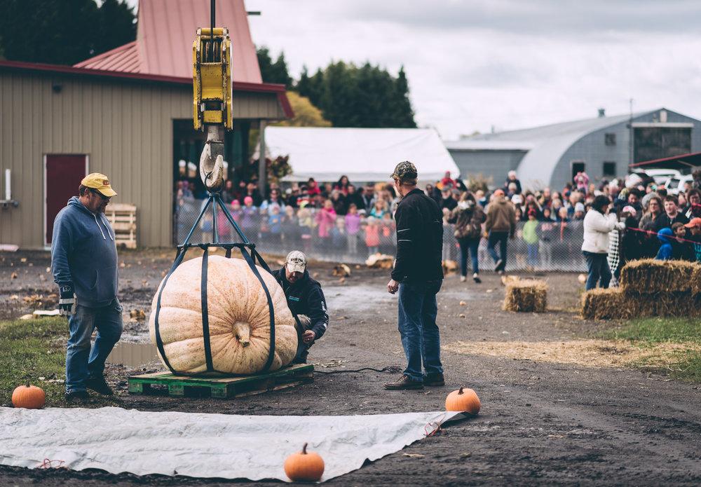 belluzfarms-pumpkinmania-2018-blog-6.jpg