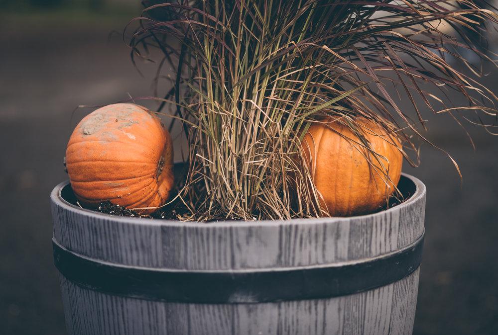 belluzfarms-pumpkinmania-2018-blog-24.jpg