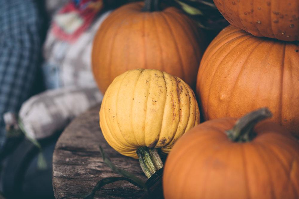 belluzfarms-pumpkinmania-2018-blog-25.jpg