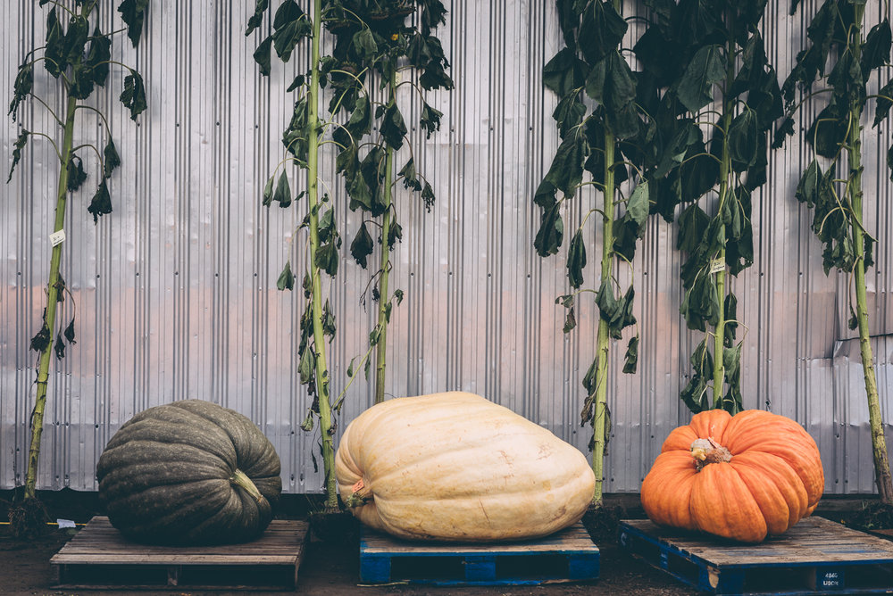 belluzfarms-pumpkinmania-2018-blog-31.jpg