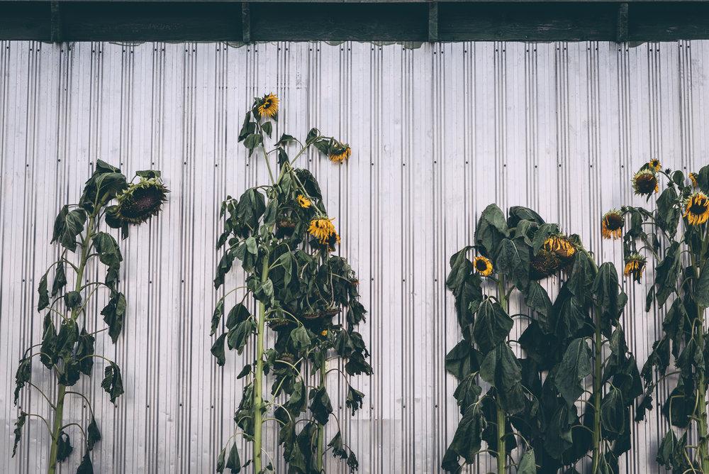 belluzfarms-pumpkinmania-2018-blog-32.jpg