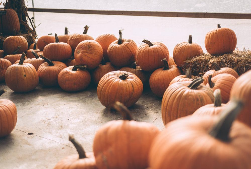 belluzfarms-pumpkinmania-2018-blog-36.jpg