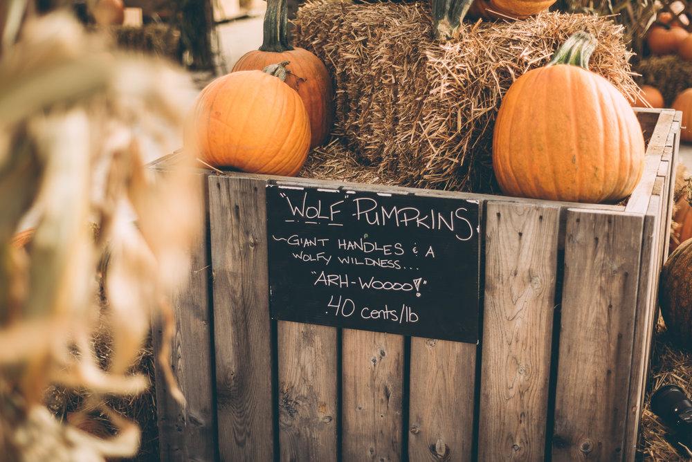 belluzfarms-pumpkinmania-2018-blog-39.jpg