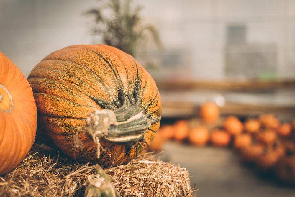 belluzfarms-pumpkinmania-2018-blog-40.jpg