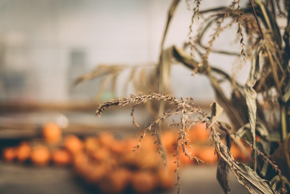 belluzfarms-pumpkinmania-2018-blog-41.jpg