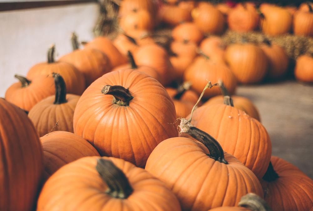belluzfarms-pumpkinmania-2018-blog-43.jpg