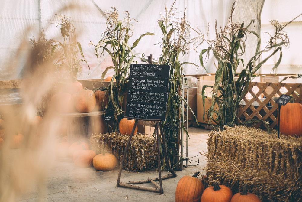 belluzfarms-pumpkinmania-2018-blog-42.jpg
