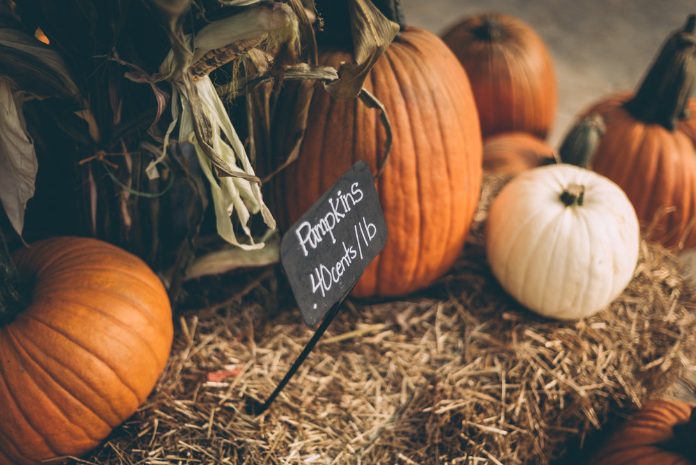 belluzfarms-pumpkinmania-2018-blog-44.jpg