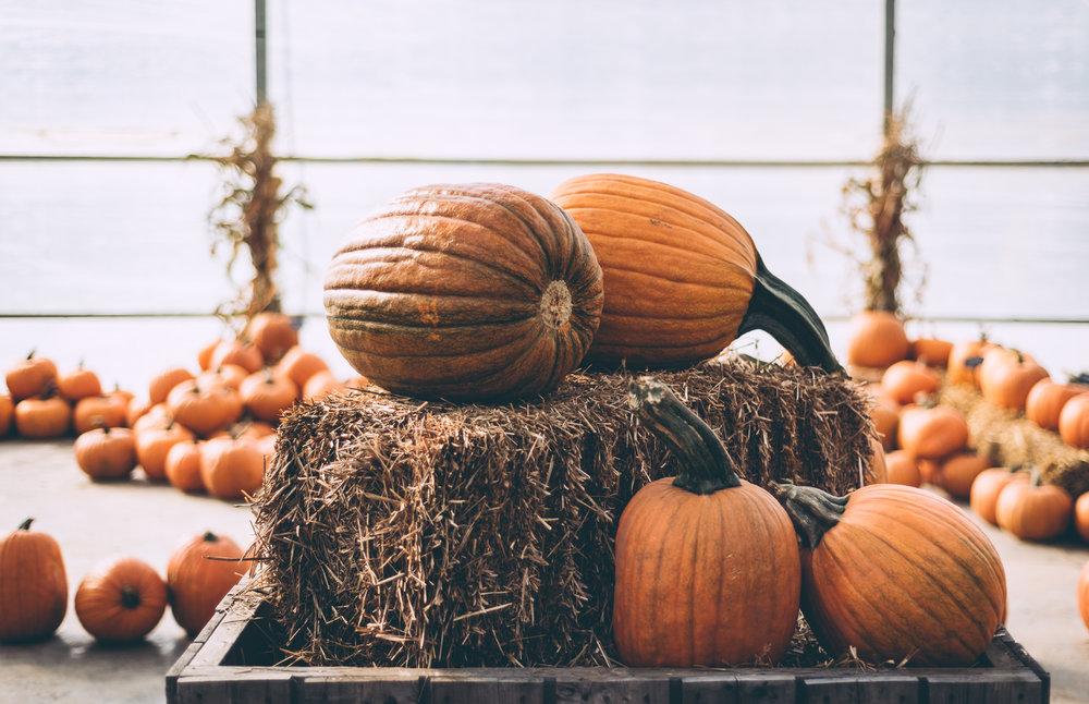belluzfarms-pumpkinmania-2018-blog-45.jpg