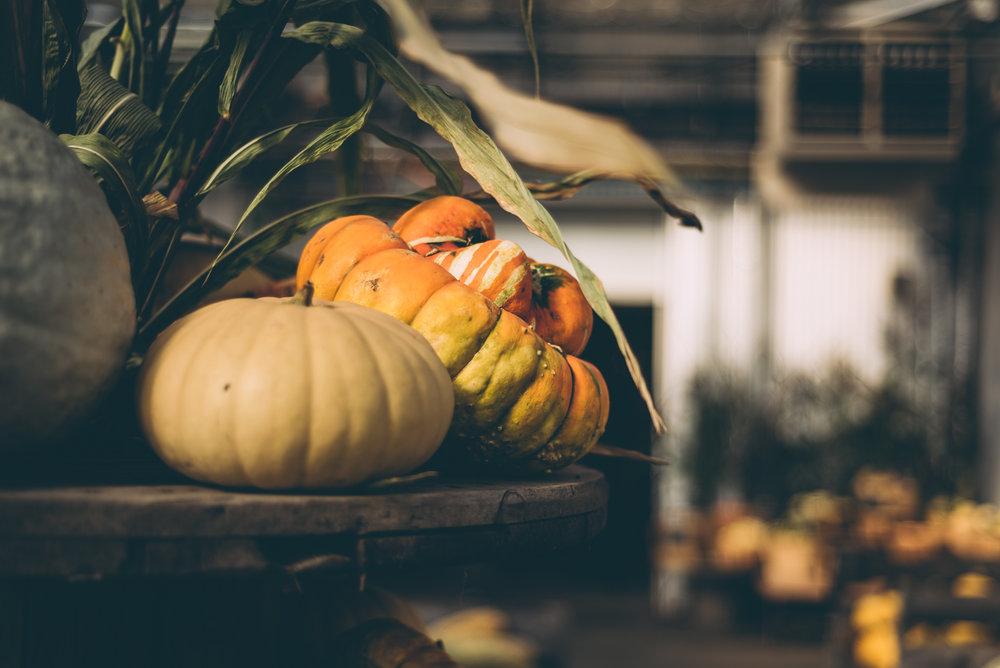 belluzfarms-pumpkinmania-2018-blog-49.jpg