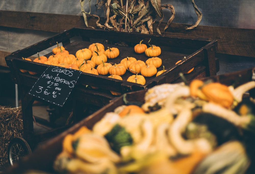 belluzfarms-pumpkinmania-2018-blog-48.jpg
