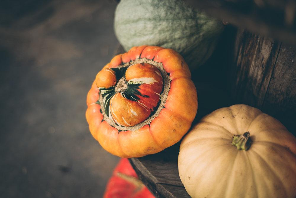 belluzfarms-pumpkinmania-2018-blog-50.jpg