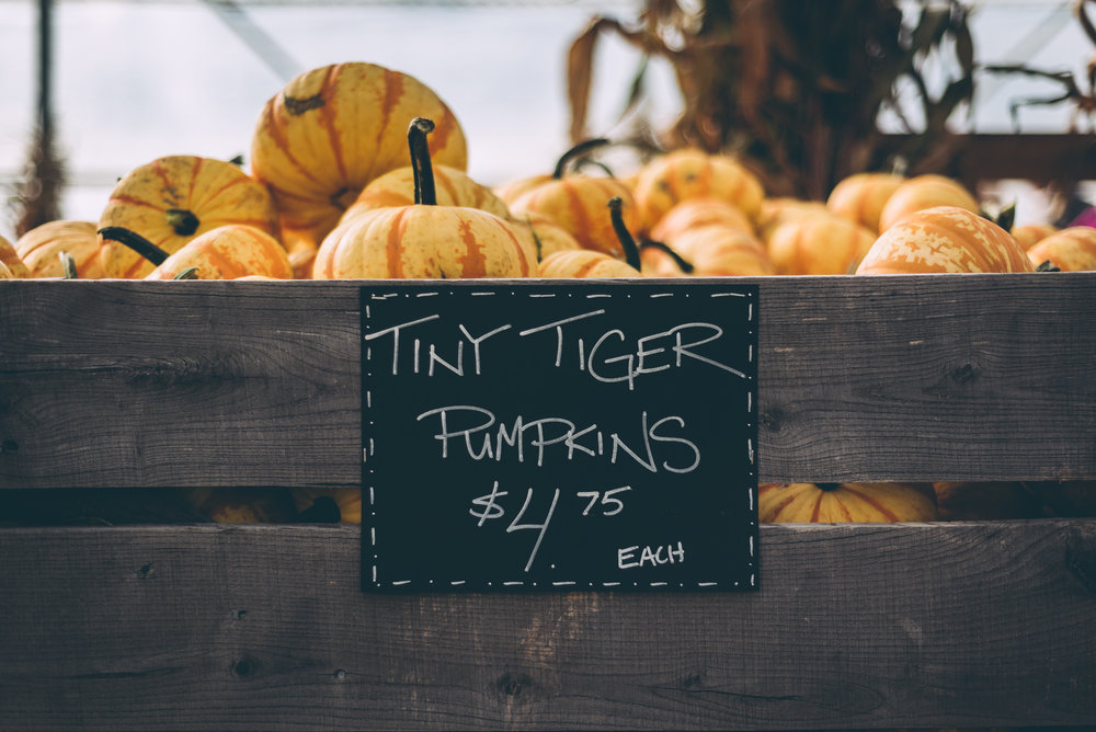 belluzfarms-pumpkinmania-2018-blog-51.jpg