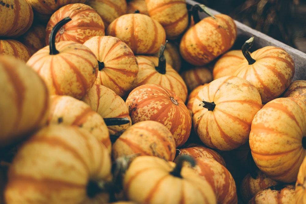 belluzfarms-pumpkinmania-2018-blog-52.jpg