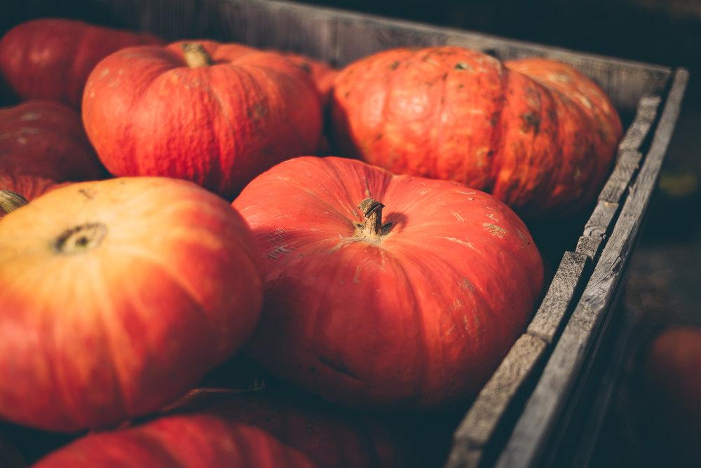 belluzfarms-pumpkinmania-2018-blog-53.jpg