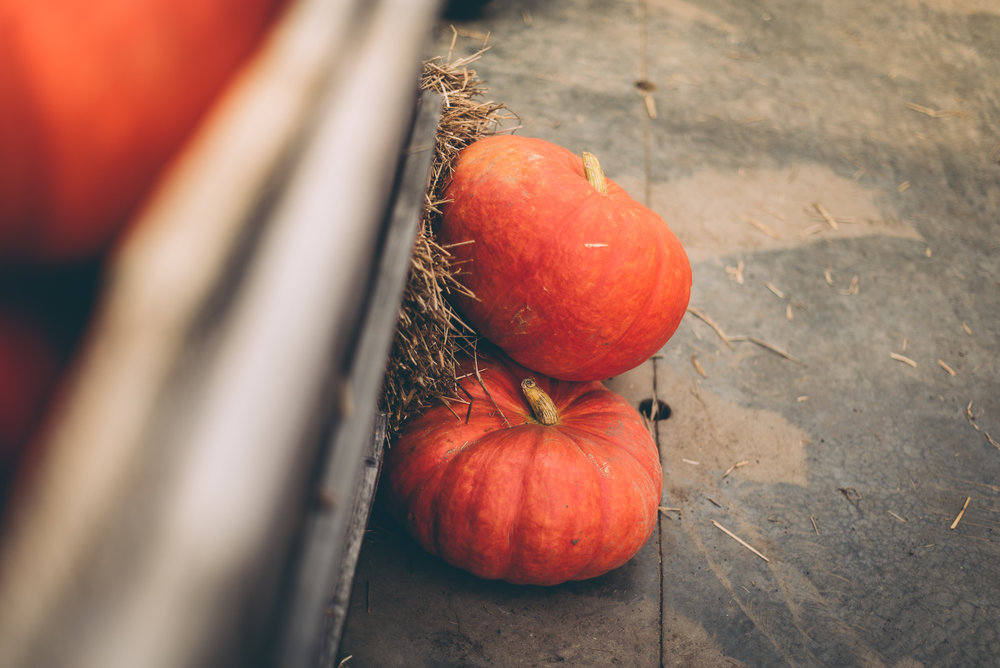 belluzfarms-pumpkinmania-2018-blog-54.jpg