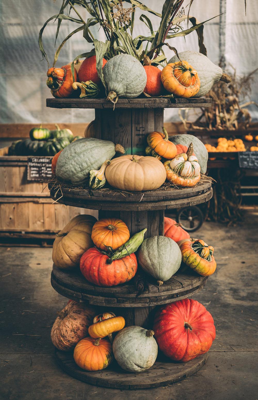 belluzfarms-pumpkinmania-2018-blog-55.jpg