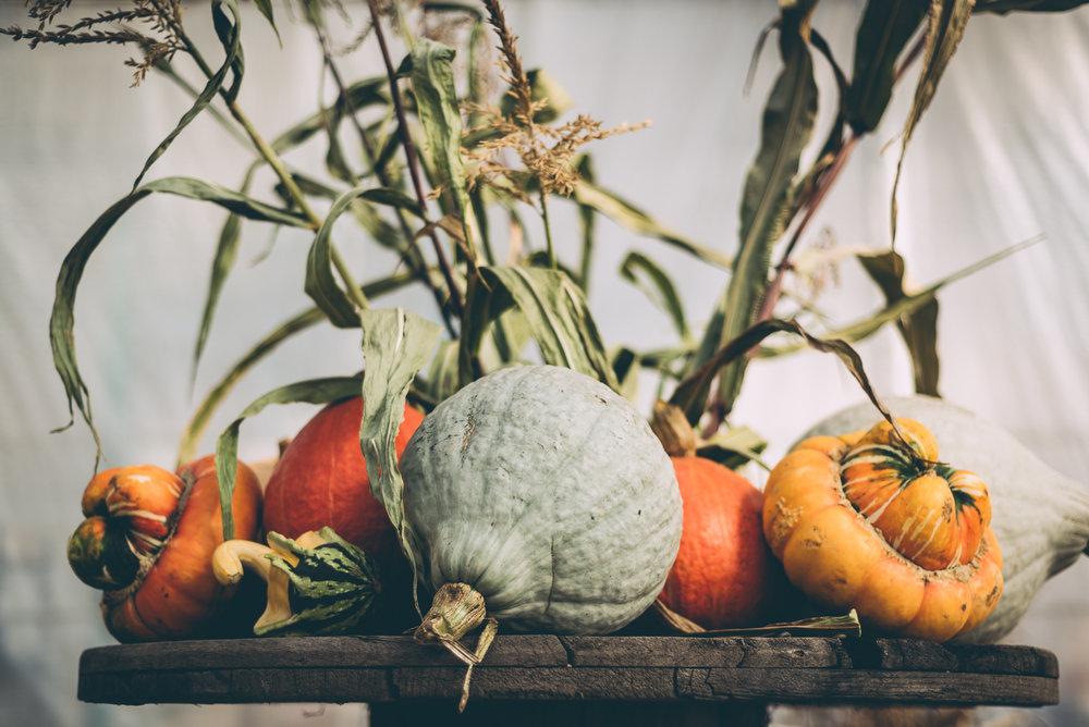 belluzfarms-pumpkinmania-2018-blog-56.jpg