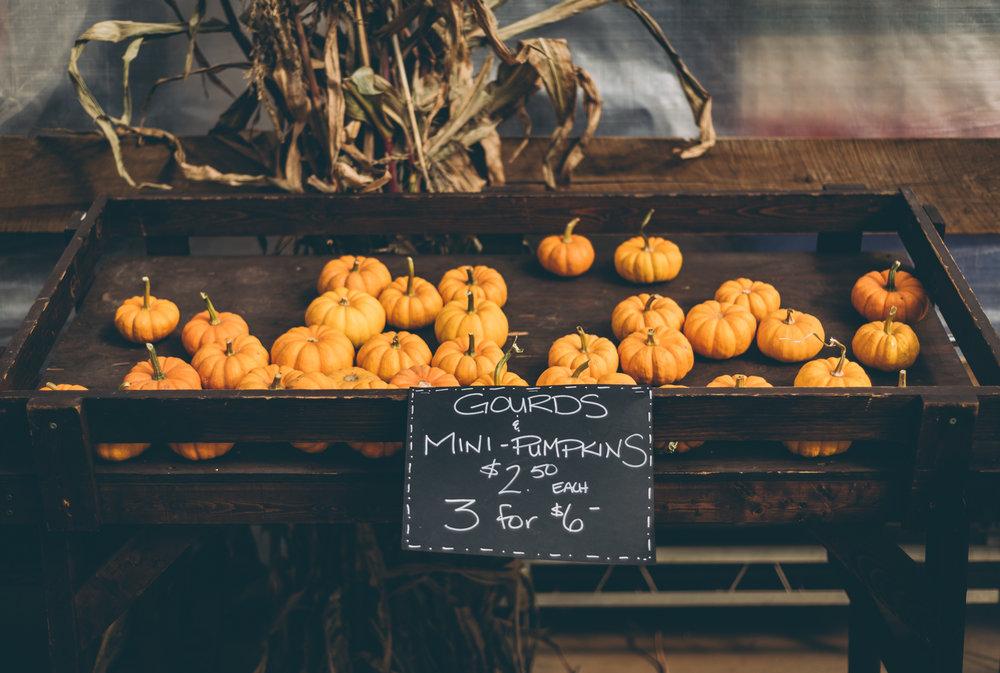 belluzfarms-pumpkinmania-2018-blog-57.jpg