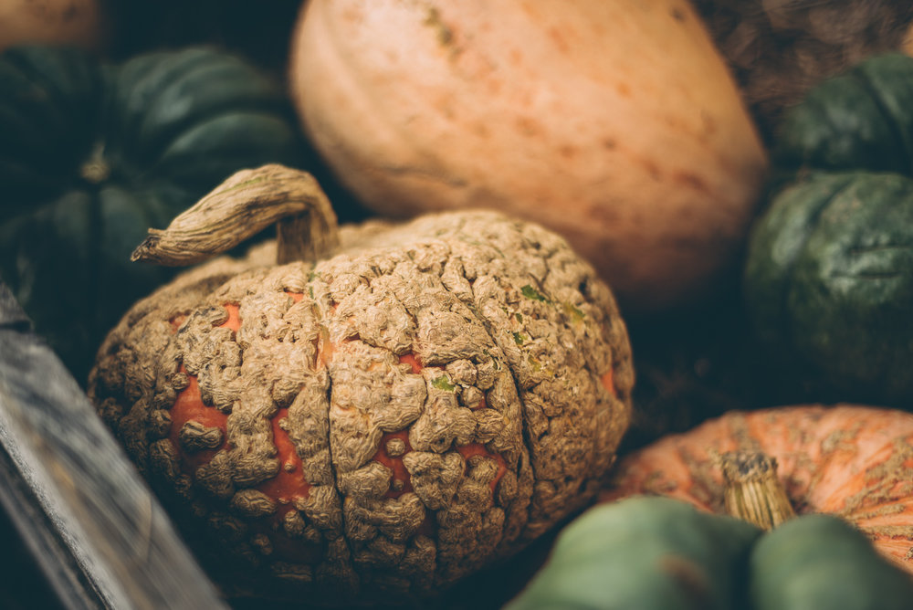belluzfarms-pumpkinmania-2018-blog-58.jpg