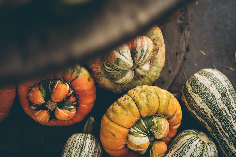 belluzfarms-pumpkinmania-2018-blog-59.jpg