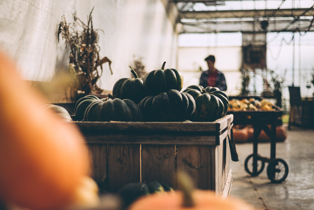 belluzfarms-pumpkinmania-2018-blog-61.jpg