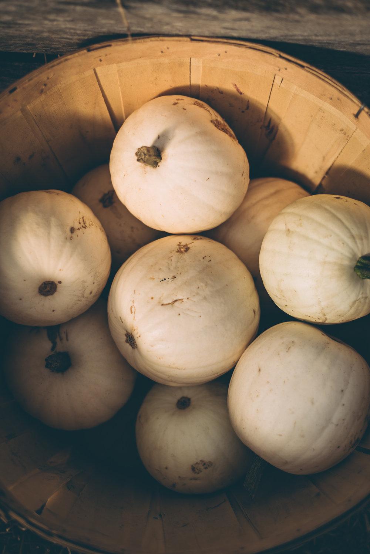 belluzfarms-pumpkinmania-2018-blog-62.jpg