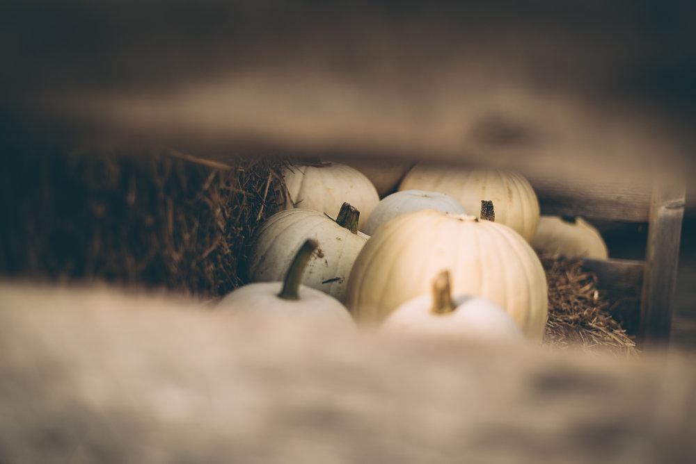 belluzfarms-pumpkinmania-2018-blog-63.jpg
