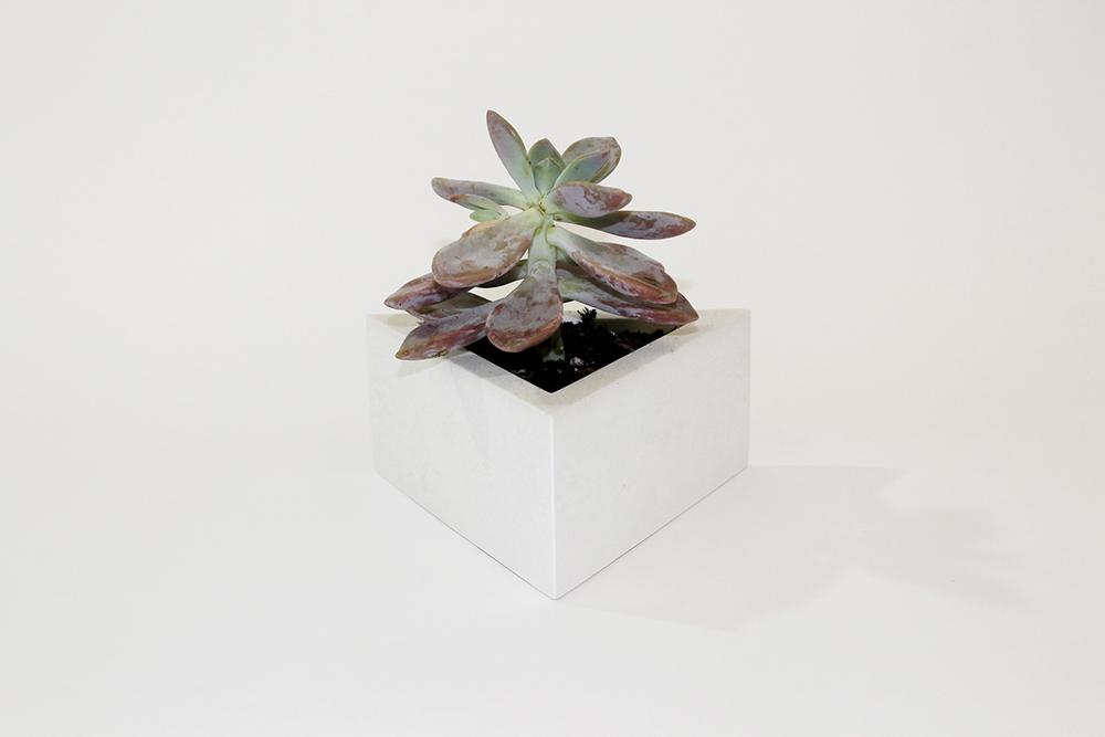 sixty white plant web.jpg