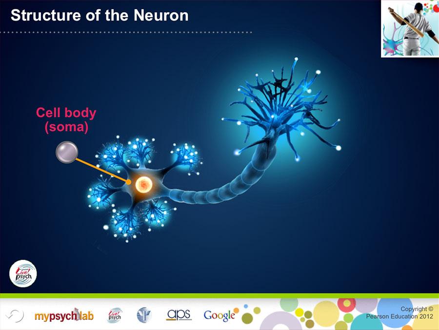 Cicc_Neuron-900w.jpg