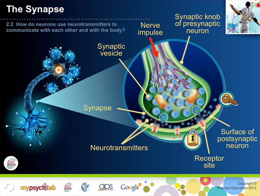 Cicc_Synapse-900w.jpg