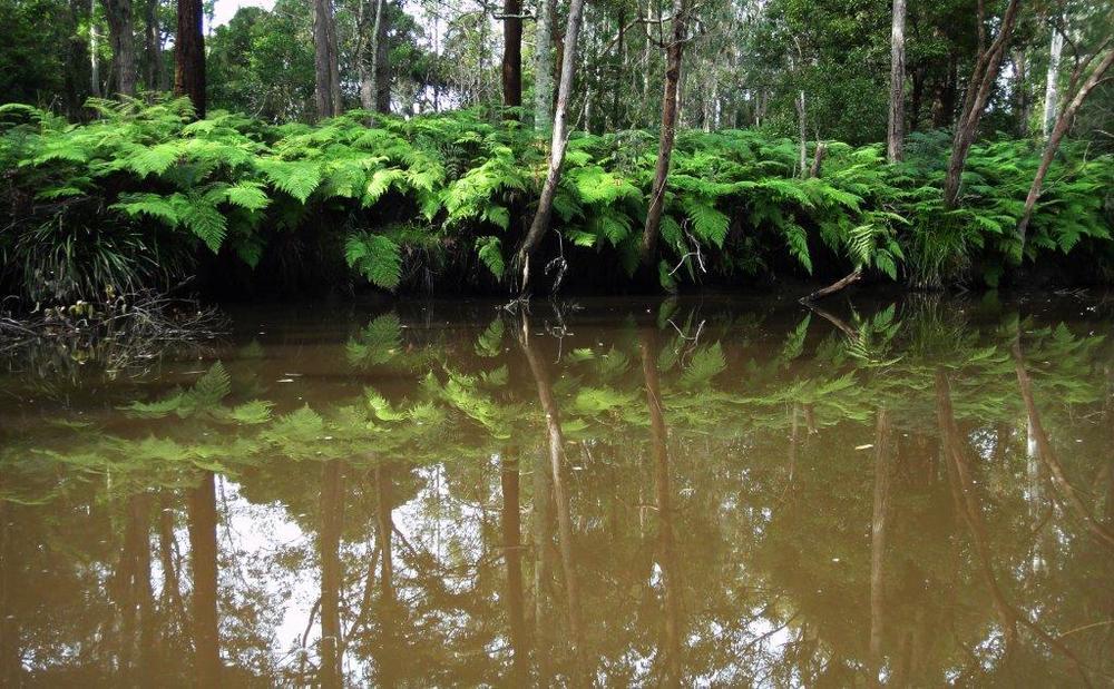 The surrounding vegetation of Stockton Creek