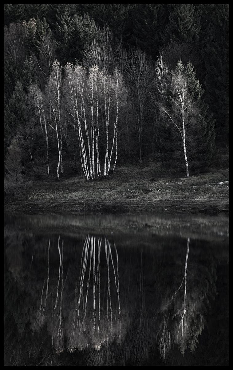 berken reflectie.jpg